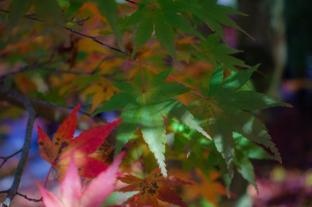 DSC00740_CameraRAW_2048.jpg