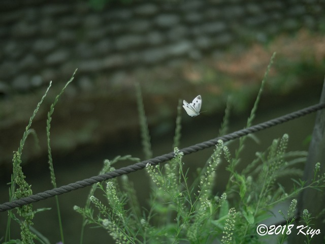 E5192580_CameraRAW_2048_signed.jpg