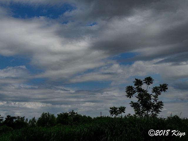 E5192657_CameraRAW_2048_signed.jpg