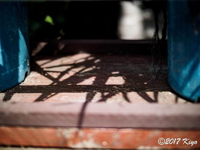 E9031161_CameraRAW_2048_signed.jpg