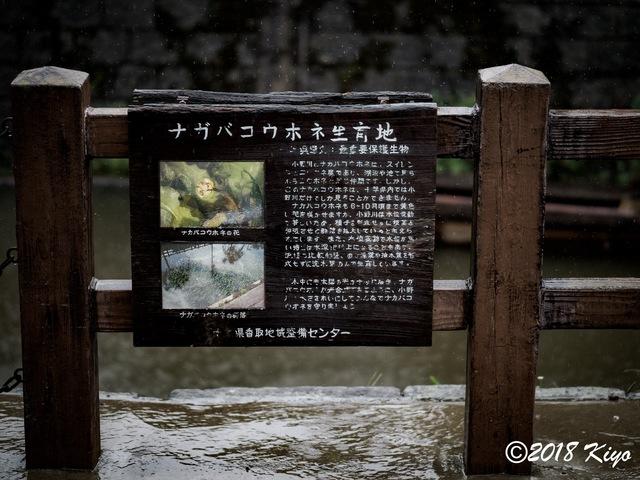 E9156077_CameraRAW_2048_signed.jpg