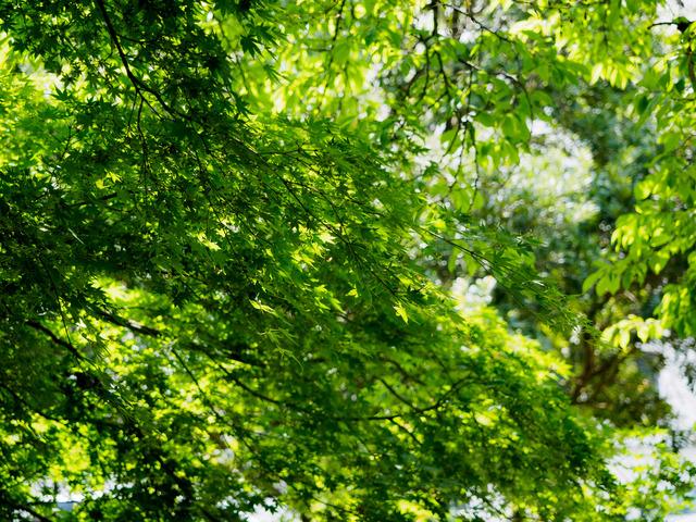 M5152331_CameraRAW_2048.jpg