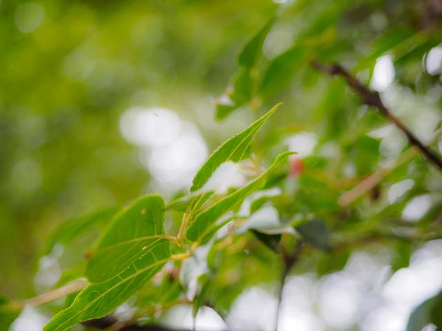 MA300283_CameraRAW_2048.jpg
