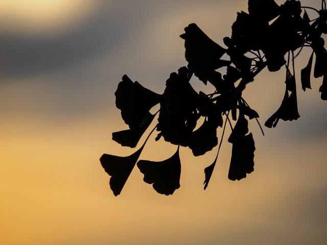 MA300362_CameraRAW_2048.jpg